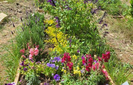 עיריית הרצליה בפיילוט ראשון מסוגו בארץ בנושא השקיה במרחב הציבורי